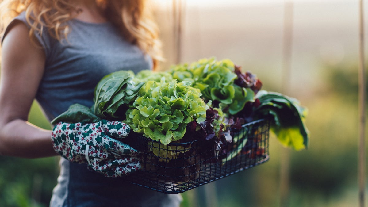 Build Stronger Muscles By Eating More Greens