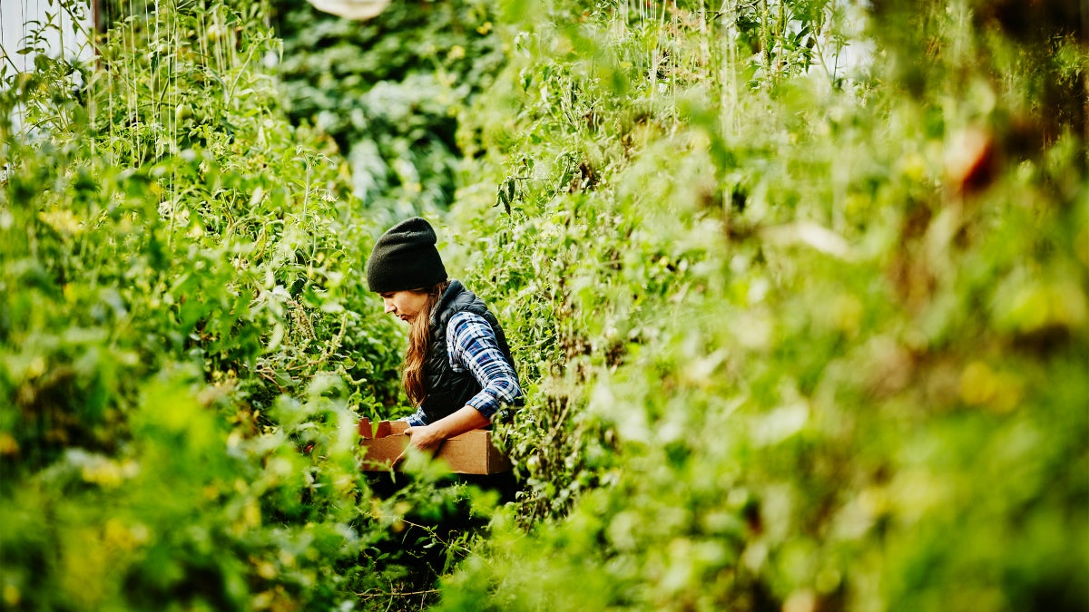 Is Regenerative Agriculture the New and Improved Organic?