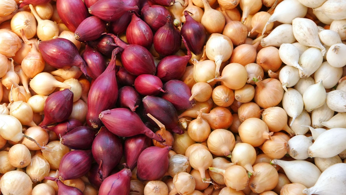 Love Onions? You Won't Believe Their Storied History