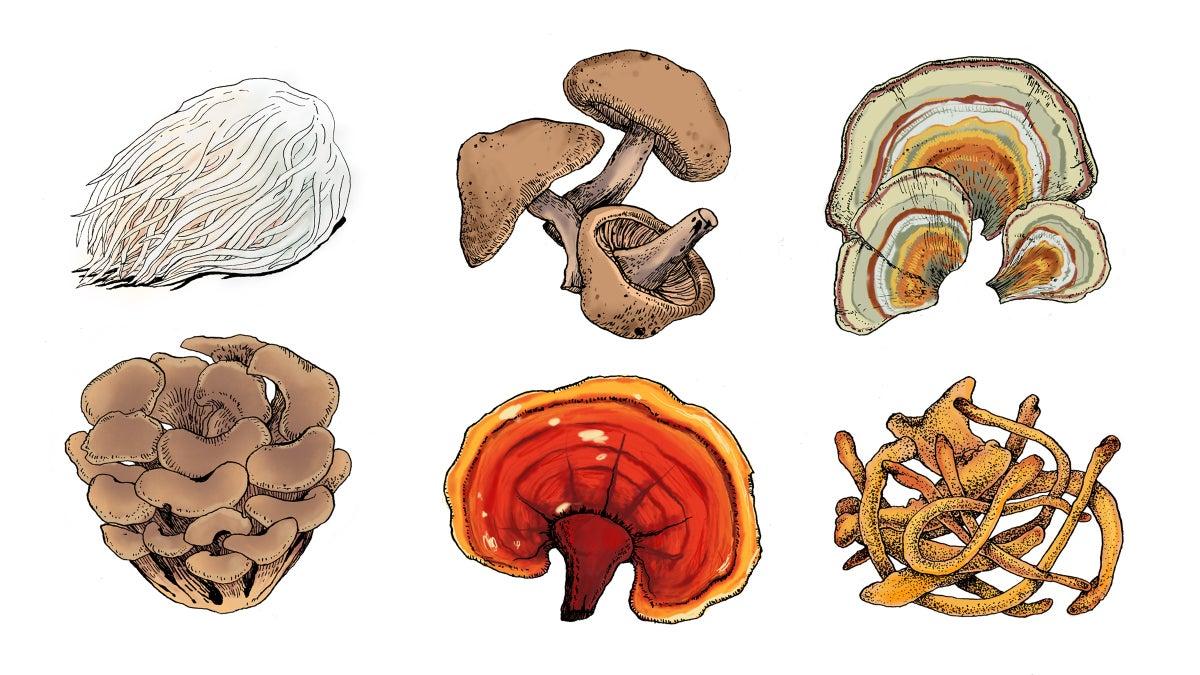 Mad About Mushrooms: How to Choose and Use Medicinal Mushrooms