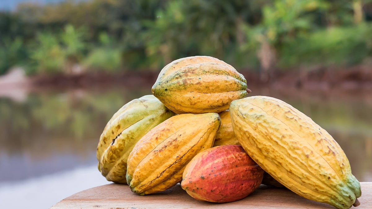 Cacao Water: A Healthy Alternative to Sugary Sports Drinks