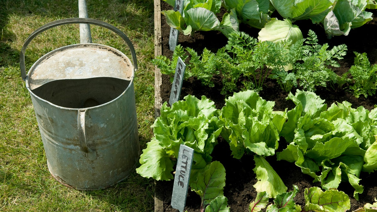 Anyone Can Grow a Garden, In Any Space. Here's How